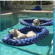 Three Items to Make your Pool More Enjoyable for your Dog!